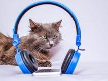Die Katze mit grünen Augen liegt nahe den Kopfhörern Entspannen Sie sich und listen Sie auf lizenzfreies stockbild