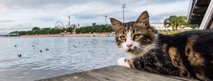 Die Katze schaut mit vorsichtigen Augen Lizenzfreie Stockbilder