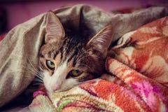Die Katze schläft im Bett Stockfotos