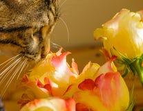Die Katze schnüffelt die Rose Stockbild