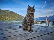 Die Katze sitzt auf dem hölzernen Pier lizenzfreies stockfoto