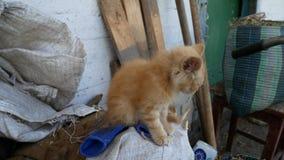 Die Katze sitzt und schaut herum Eine Dorfkatze stock footage