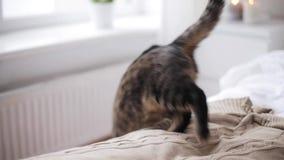 Die Katze springend vom Bett, um zu Hause auszubreiten stock video