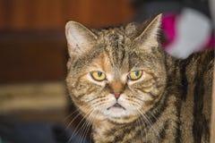 Die Katze tief im Gedanken stockfotografie
