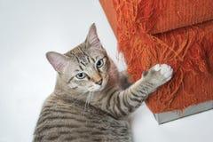 Die Katze verkratzt das Sofa im Haus Lizenzfreie Stockfotos