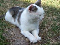Die Katze versteckt seine Augen vom Vergnügen Lizenzfreies Stockbild