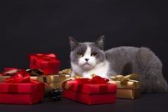 Die Katze versteckt sich im Kasten lizenzfreies stockfoto