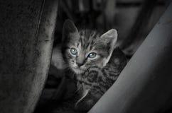 Die Katze war Rest auf dem Vorratsraum stockbild