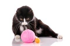 Die Katze wird auf Weiß lokalisiert Kätzchen wird mit einem Ball des Threads gespielt Lizenzfreie Stockbilder