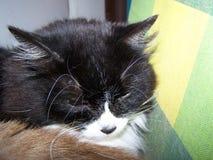 Die Katzen Lizenzfreies Stockbild