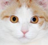 Die Katzenaugen Stockbilder