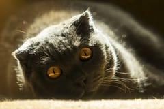 Die Katzenaugen Lizenzfreie Stockbilder