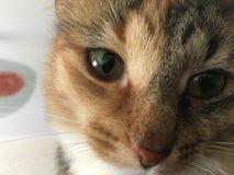 Die Katzenaugen Lizenzfreie Stockfotos
