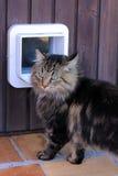 Die Katzenklappe Stockfotografie