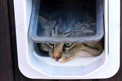 Die Katzenklappe Stockbild