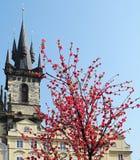 Die Kirche mit dem Blumenbaum Stockbild