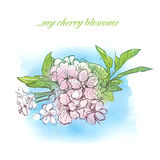 Die Kirschblüten Stockfotos