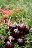 Die Kirsche auf dem Gras Stockfotografie