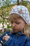Die Kirschen in der Blüte Stockfoto
