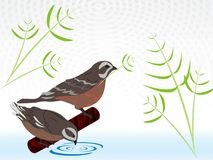 Die kleine Geschichte des Vogels zwei stockbilder