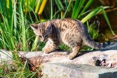 Die kleine Katze Stockfoto