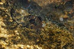 Die kleine Krabbe Lizenzfreies Stockbild