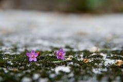 Die kleine rosafarbene Blume lizenzfreies stockbild