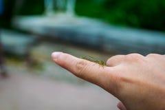 Die kleine schöne Libelle, die auf einem Finger stillsteht lizenzfreie stockbilder