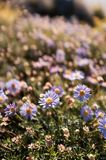 Die kleinen Blumenblätter des Frühlinges lizenzfreies stockfoto
