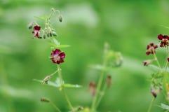 Die kleinen Feldblumen auf dem Gras Purpurrote Blumenblätter stockbilder