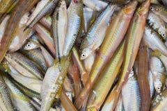 Die kleinen Fische, die im Kasten tot sind, färben Weiß stockfotos