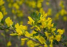 Die kleinen gelben Blumen des Waldes Stockfotografie