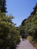 Die Klippenwohnungen in Mesa Verde National Park Colorado USA Es gibt ungefähr 600 Klippenwohnungen mit dem Nationalpark Stockbild