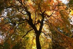 Die Knochen von Bäumen stockbild