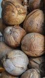 Die Kokosnuss Lizenzfreie Stockbilder