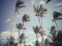 Die KokosnussPalme Stockfotos
