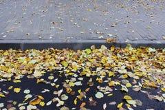 Die Kombination des gelben Herbstlaubs auf Asphalt und den Pflasterungsfliesen nahe dem BusParkplatz Lizenzfreies Stockfoto