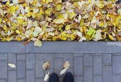 Die Kombination des gelben Herbstlaubs auf Asphalt und den Pflasterungsfliesen nahe dem BusParkplatz Stockbilder