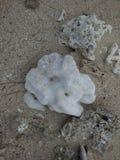 Die Koralle Lizenzfreie Stockbilder