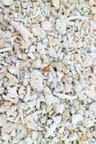 Die Koralle auf dem Strand lizenzfreie stockbilder