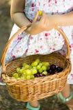 Die Korbfrucht in den Händen des Mädchens Lizenzfreie Stockfotos