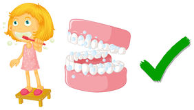 Die korrekte Weise des Putzens von Zähnen Lizenzfreies Stockbild
