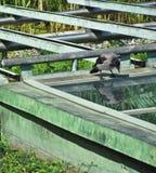Die Krähe betrachtet seine Reflexion Lizenzfreie Stockfotografie