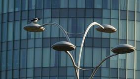Die Krähe und die Stadt Stockfotos