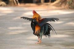 Die Krähen verbreiten ihre Flügel elegant lizenzfreie stockfotografie