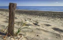 Die Kraft der Natur: einsame Blume auf dem sandigen Strand nahe bei einem genagelten hölzernen Pfosten Sommer Wildflowers Lizenzfreie Stockfotografie