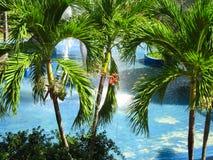 Die Krone der Palmen gegen das Poolwasser Lizenzfreies Stockfoto