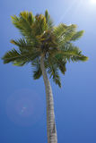 Die Krone der Palmen gegen den Himmel Stockfotos