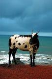 Die Kuh. Stockfotografie