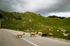 Die kurvenreiche Straße in Montenegro Lizenzfreies Stockbild